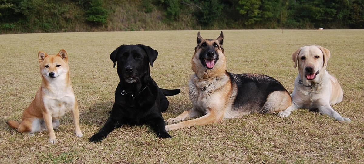 犬 種類 警察